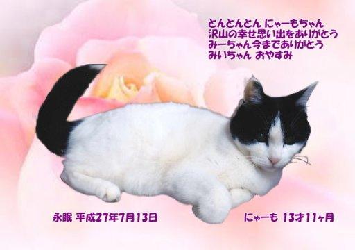 150714oomori-nyaamo-tyan.jpg