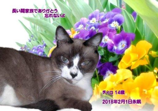 180201itihara-tyiko-tyan.jpg