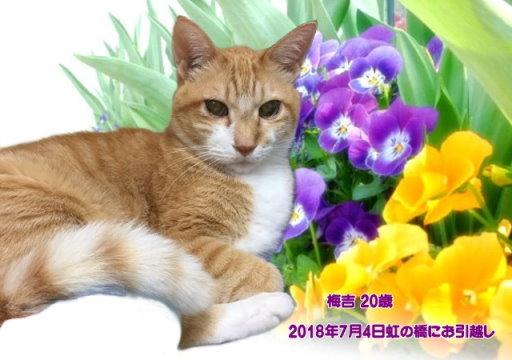 180705iwahasi-umekiti-tyan.jpg