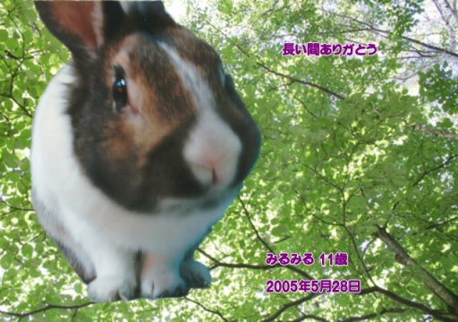 180707yamada-mirumiru-tyan050528.jpg