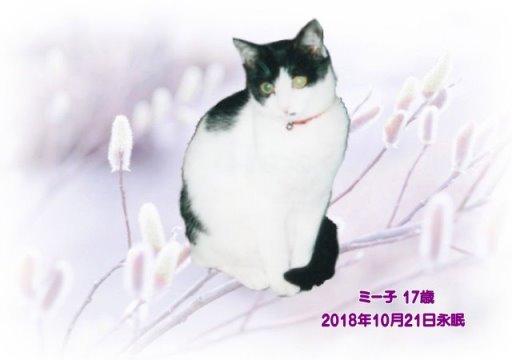 181022nakamoto-miiko-tyan.jpg