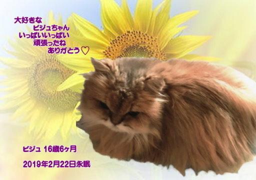 190224nisio-bijyu-tyan.jpg