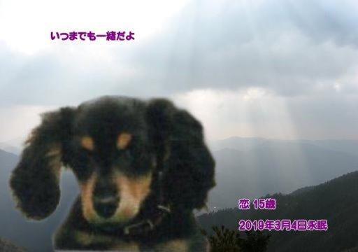 190304wada-renn-tyan.jpg
