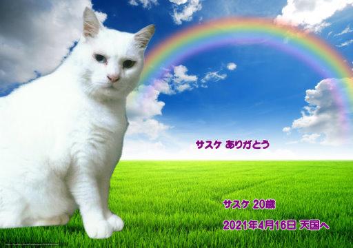 210416bann-sasuke-tyan.jpg