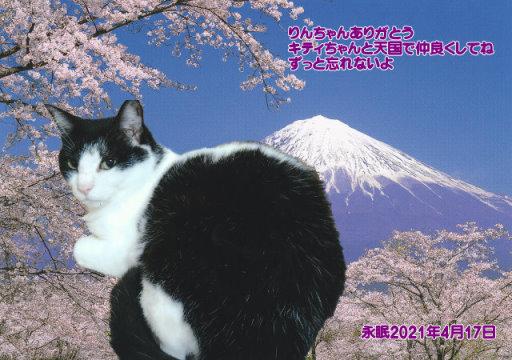 210418fukusima-rinn-tyan.jpg