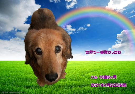 210423kuki-haru-tyan.jpg