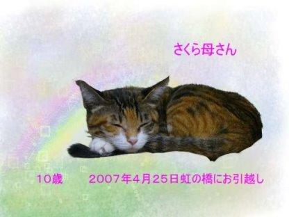sakura-tyan0705-3.jpg